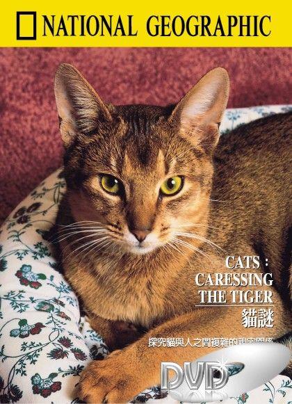 Gatos - Acariciando o tigre